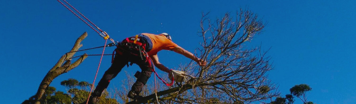 Tree Services Albany